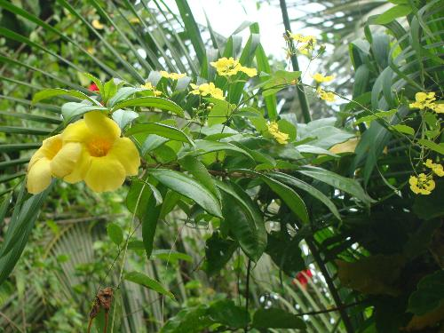 Flowers growing on creepers - I have several perennial creepers and bushes that flower throughout the year.