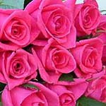 rose - beautiful red roses