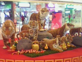 year of the tiger - taken at the mall..