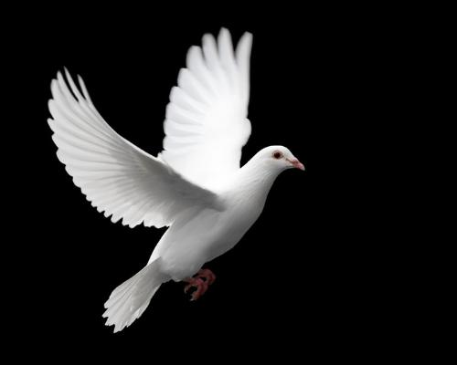 Care free life - A dove to symbolize the care-freeness that life should be. It's free for everyone but, like a dove it can easily be taken away.