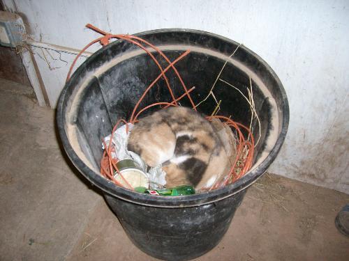 Jane, the trash can cat! - Jane will sleep anywhere!