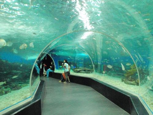 Manila Ocean Park - here is a picture of manila ocean park, this is the part where you will pass by a tunnel-like that is made out of clear glass and you will see the different creatures above you and on your side.