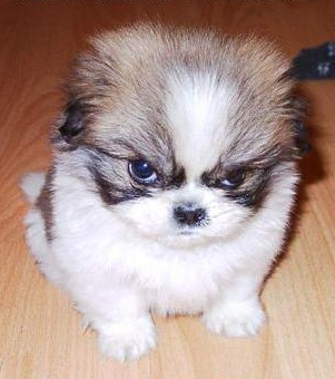 Angry!!! - Angry Puppy!!!