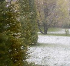 Snow in April - My backyard covered in some snow.