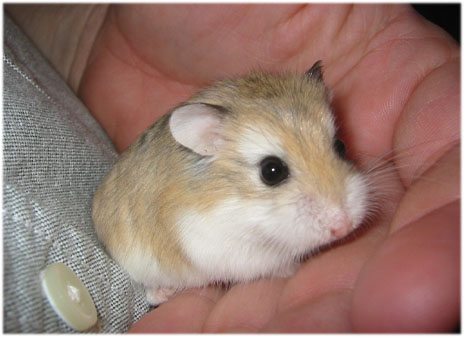 myLot Photos - cute hamsters