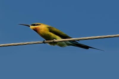 birds - bird on a wire