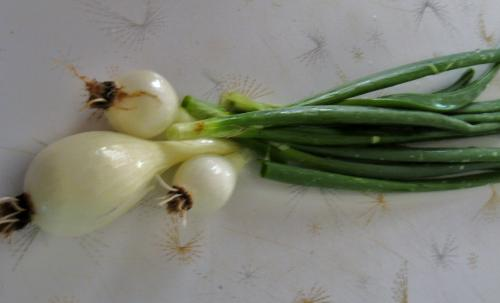 Onions - Picked from my garden this weekend.