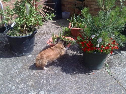 Gissi gardening - Well well let me just get up here and get this bit out while no one is looking hehehe they will not know it was me