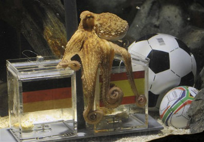 Paul the Octopus chose Spain! - And Spain really won the game! Wow!