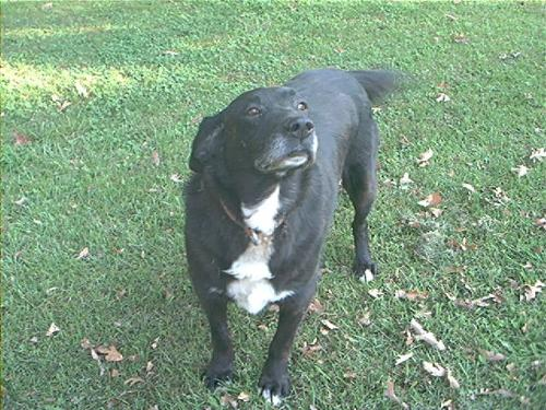 Photo of my Dog Spud (two years ago)!! - Here is my Dog Spud, this was taken back in OCT of 2008
