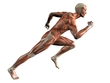 the human body - muscles reflect the shape of our body