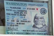 Ugly pictures on driver's license - Unflattering pictures on official ID's