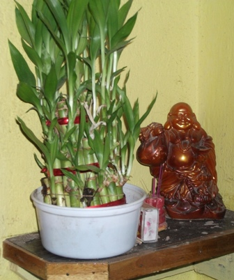 laughing buddha and mini bamboo plant - picture of laughing buddha and mini bamboo plant in my home