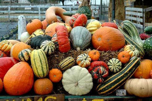 myLot Photos - harvest