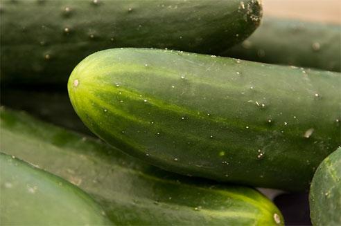 cucumbers - Cucumbers, veggies
