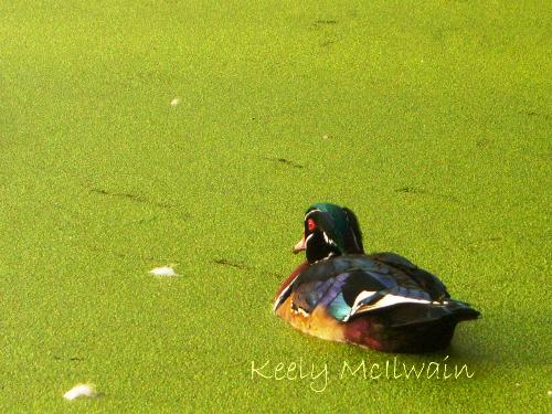 One of my items - This photo was taken at a pond in Winnipeg, Manitoba. Fall 2010