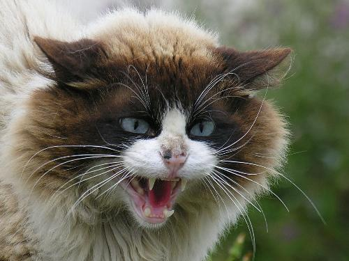 Mad cat.. - for being used so somebody can expand