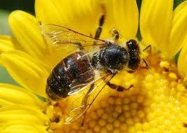 allergic - allergic reactions