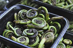 Fiddleheads - o you know what fiddleheads are?