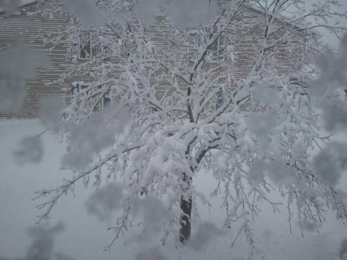 This photo is from the first snowstorm of the 2010-2011 winter!