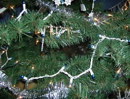 cat in a tree - This is Eclipse in my artificial tree