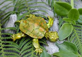 i am in turtle mode - and it sucks!