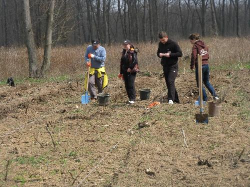 Volunteers planting trees - At Snagov, near Bucharest, Romania, in the beginning of april as part of the reforestation of the forest there.