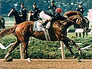 Easy Goer - Easy Goer won the 1989 Belmont Stakes.