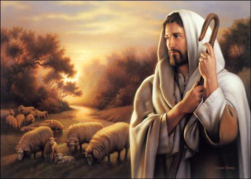 The Shepherd  - The Shepherd and lambs.