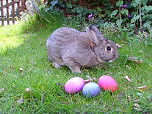 The Easter Bunny? - It might be! Sunday is Easter! He'll be busy!