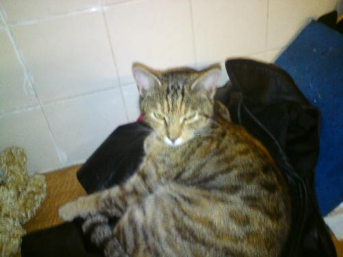 Another one of my cats - This is another one of my cats