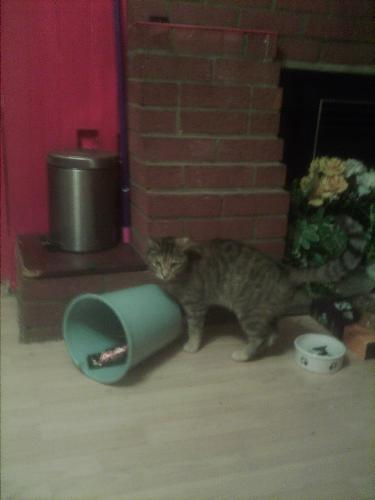 My cat playing it with the bin - My cat playing