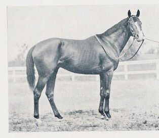 Gallant Fox - He won the Triple Crown in 1930. The second horse to do so.