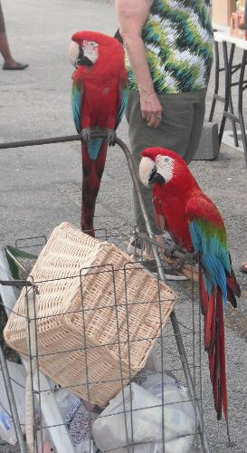 Parrots - I took this photo while at the flea market.