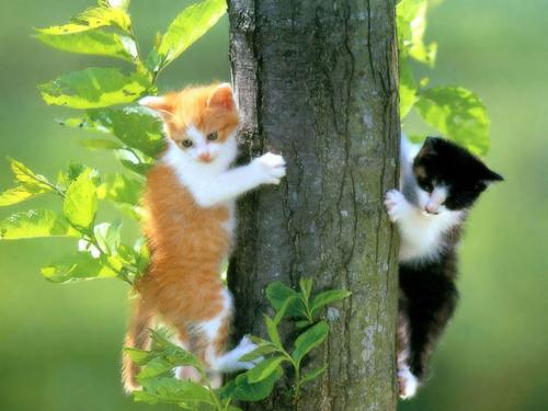 Cats On A Tree - Two cats climbing up a tree.