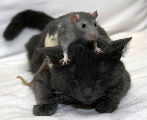 The Best Of Friends - Talk about the odd couple.