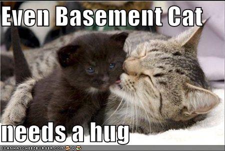 Everyone Needs A Hug - Even basement cat!