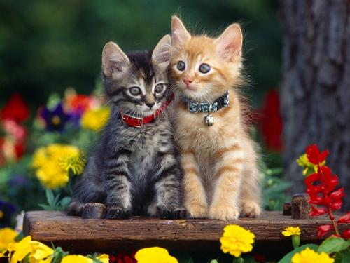 cute cats - this is a pic of cute kittens..