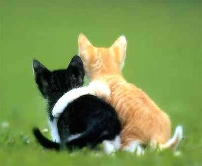 cute kittens - this is a pic of 2 cute kittens.. in the garden