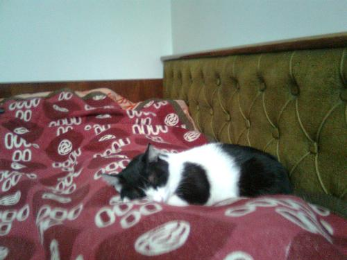 New bed pose 2 - Here is the second position of Daisy in the new bed, she has been trying a lot for sleeping.