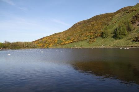 Pond in Edinburgh - Pond in Edinburgh in spring