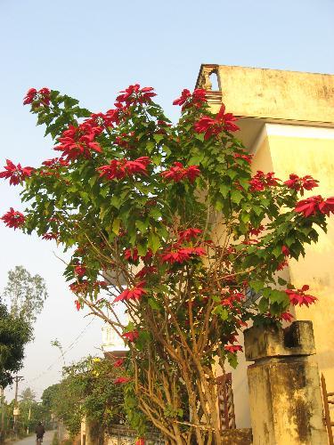 flower 3 - it is in my hometown
