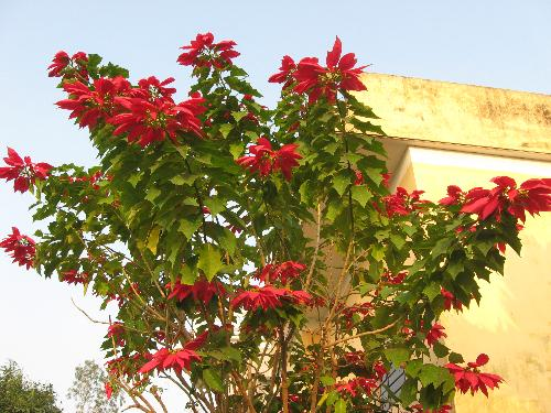 flower 4 - in my hometown