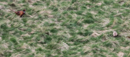 Spot the bird - A well-camouflaged bird