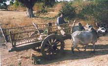Bullock Cart - This cart is being pulled by two Zebu oxen.