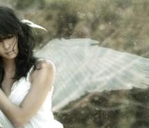 Fragilewings - Fragile wings.