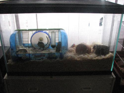 Happy as clams - The gerbils with their tank.