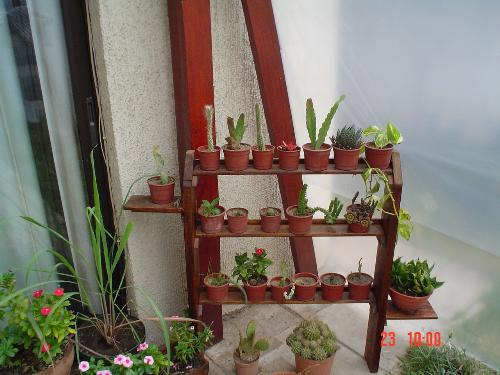 A wooden shelf with small cacti - I made a wooden shelf for some of the smaller cacti.