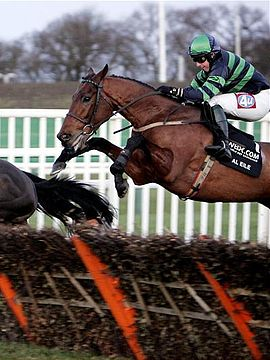 Steeple chase racing - This racing sport is even crazier then TB racing!