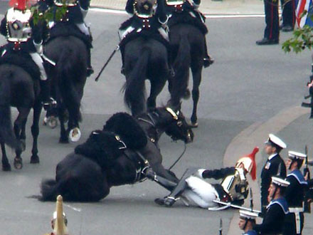 oops! - On the way to Buckingham Palace and behind the Royal pocession one of the Queen's guard's horse stumbled and his rider came off. I was concerned when I saw the photo at first but when I heard both the horse and rider were ok,I felt better!